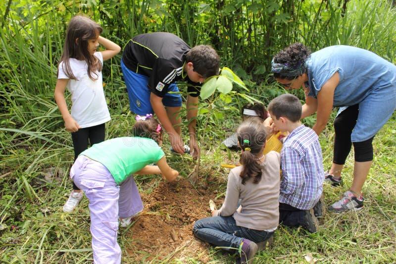 Niños que plantan un árbol del chrisantha de Tabebuia en el país de Caracas fotos de archivo