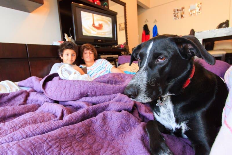 Niños y perro foto de archivo libre de regalías