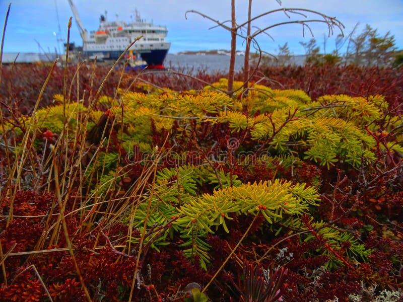 Niższe północne wybrzeże, tundra zdjęcie royalty free
