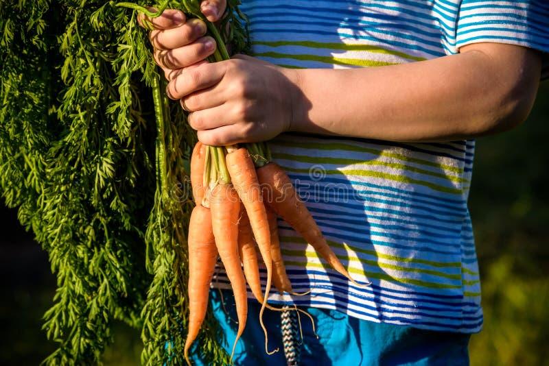 Ni?o peque?o lindo que sostiene un manojo de zanahorias org?nicas frescas en jard?n nacional Forma de vida sana de la familia fotografía de archivo libre de regalías