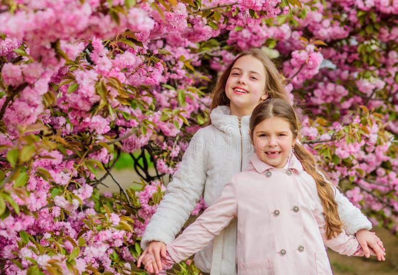 Ni?os en las flores rosadas del fondo del ?rbol de Sakura Concepto de la bot?nica Ni?os que gozan de la flor de cerezo Sakura Ros imagen de archivo libre de regalías