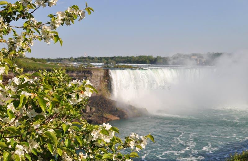 Niagara Falls na mola fotografia de stock royalty free