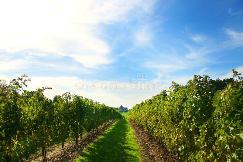 niagara vingårdar royaltyfria bilder
