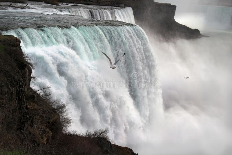 Niagaradalingen en Zeemeeuwen royalty-vrije stock fotografie