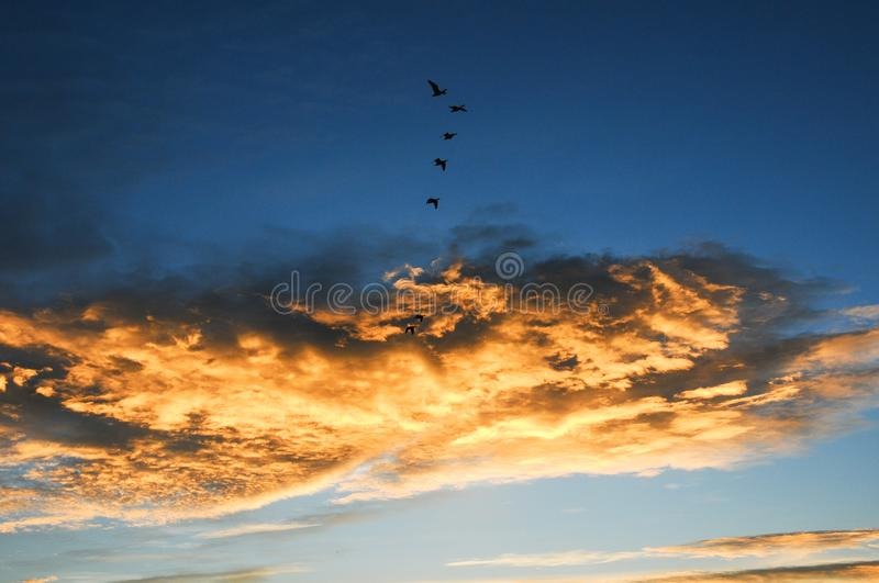 Birds and colorful cloud in Nianhu Lake. Nianhu Lake is located in a nature reserve in Yunnan Province. Nianhu Lake means miss someone. It is a habitat for rare royalty free stock photography