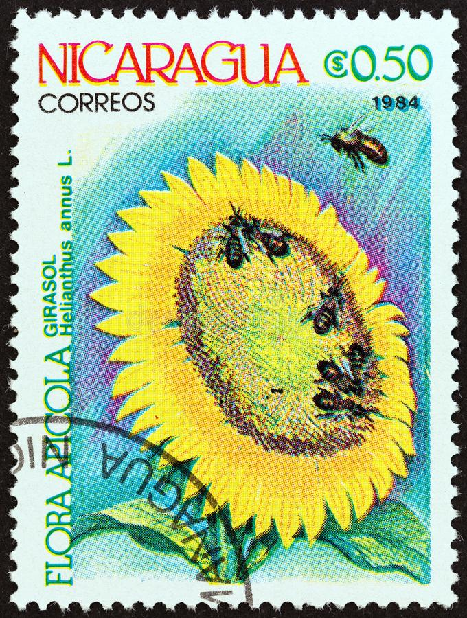 NICARAGUA - CIRCA 1984: A stamp printed in Nicaragua shows Sunflower, circa 1984. NICARAGUA - CIRCA 1984: A stamp printed in Nicaragua from the `Agricultural royalty free stock images