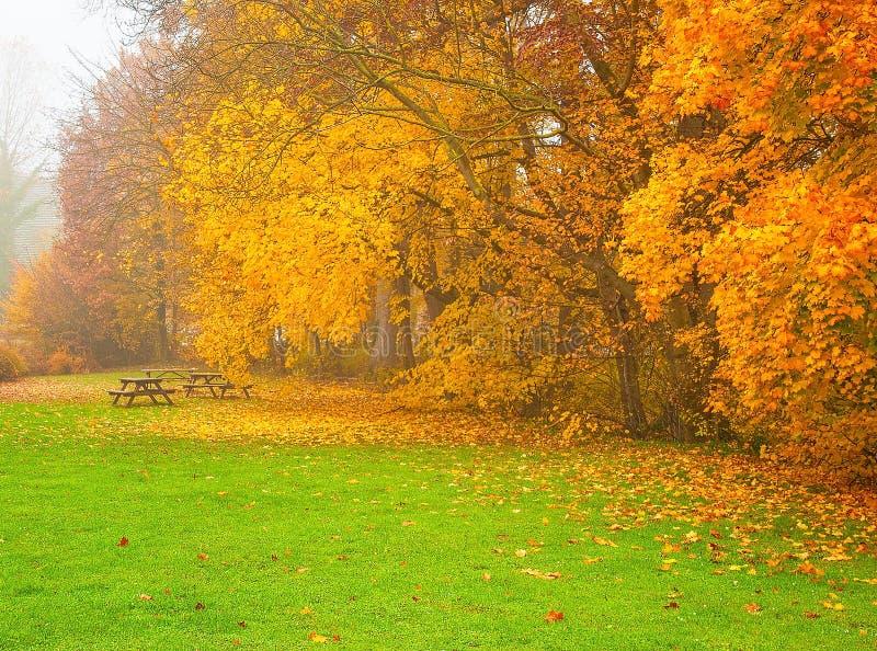 Nice autumnal scene royalty free stock photo