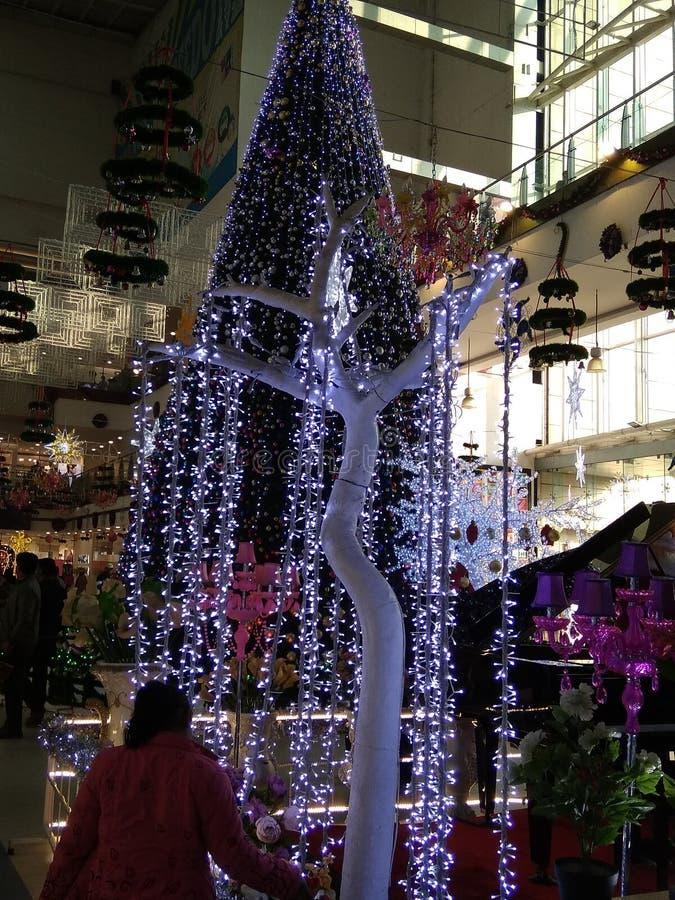 So nice big size Christmas tree or green colour royalty free stock photos