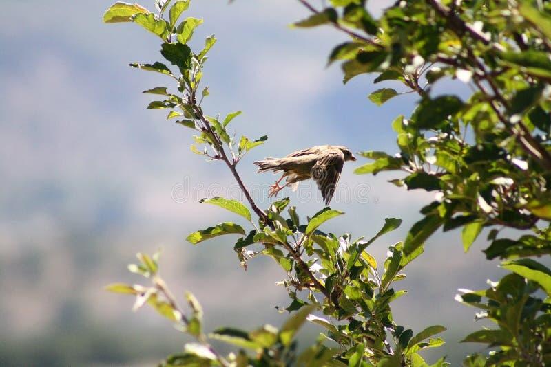 Bird. Nice bird flaying tree bough stock image