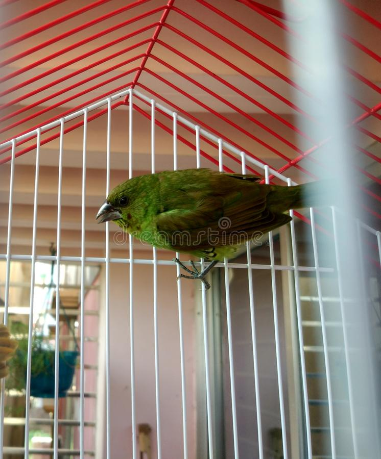 A nice bird in my home royalty free stock photo