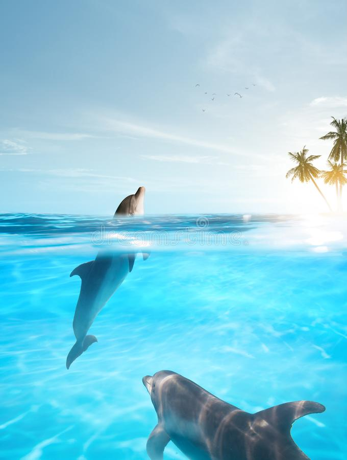 Free Nice Bottle Nose Dolphin  Swimming In Blue Crystal Water Stock Photography - 160534252