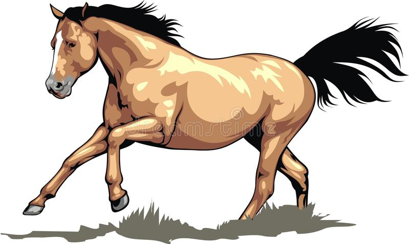 Nice brown horse stock illustration