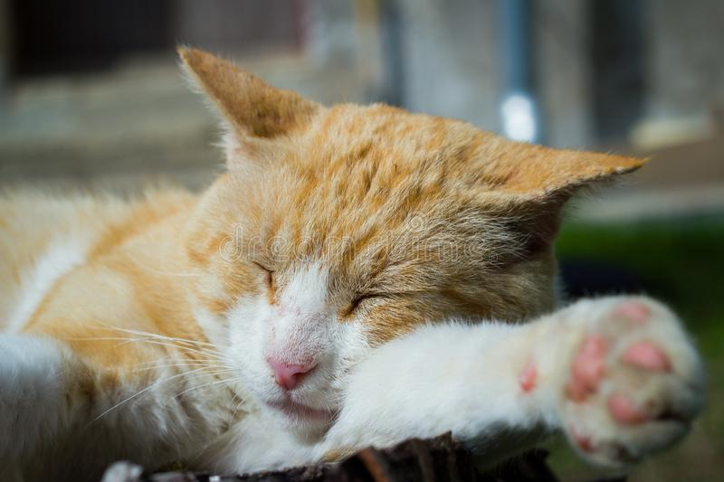 Nice cat relaxing on a piece of wood on the huge garden. Resting stock photography
