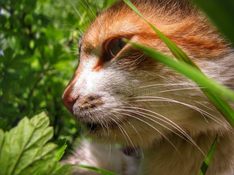 Nice cat royalty free stock photos