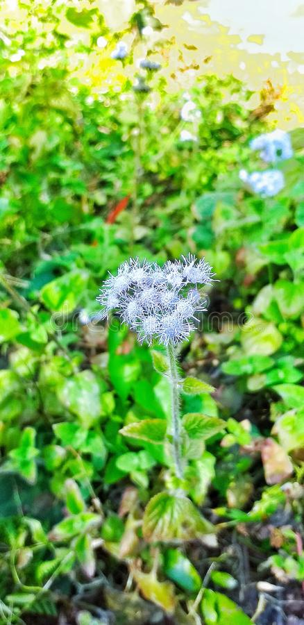 Beautiful flower. Nice click of flower royalty free stock photos