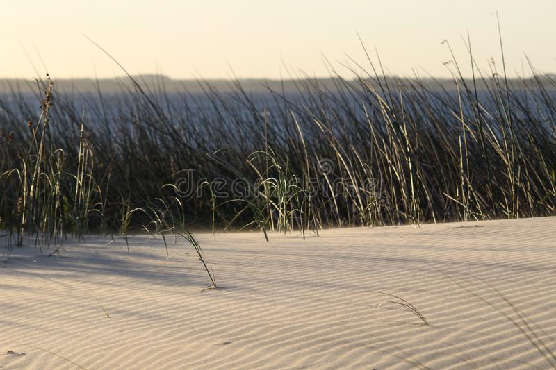 Coastal scene in sunset with plants and beautiful lake royalty free stock photography