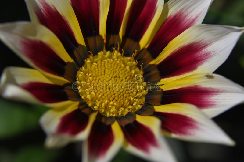 Nice colorful flower close up in the sunshine stock images