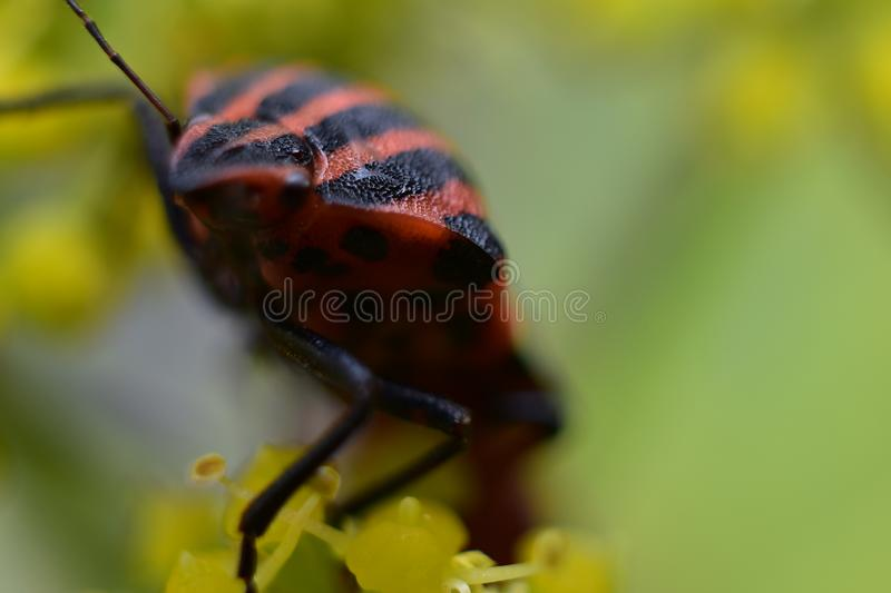 Nice colorful insect close up in the sunshine royalty free stock photos