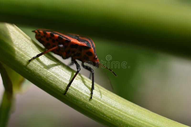 Nice colorful insect close up in the sunshine stock image