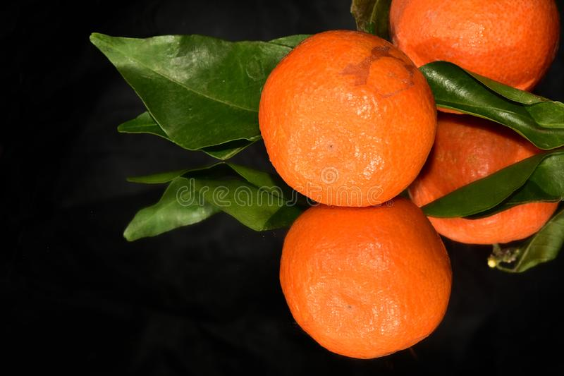 Nice orange  close up in the sunshine stock images