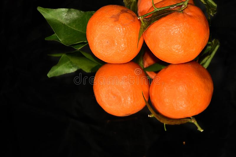 Nice orange  close up in the sunshine stock photography