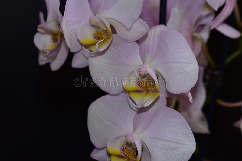 Nice colorful orchid close up in the sunshine stock photo