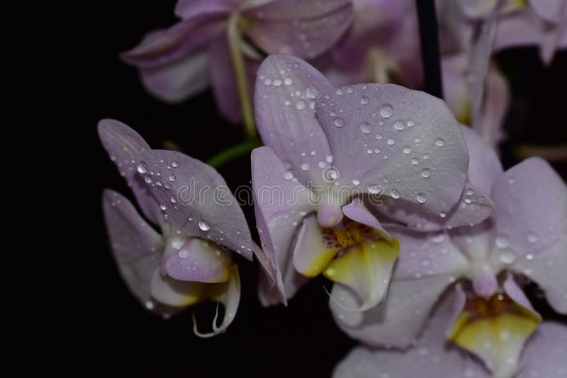 Nice colorful orchid close up in the sunshine royalty free stock photos