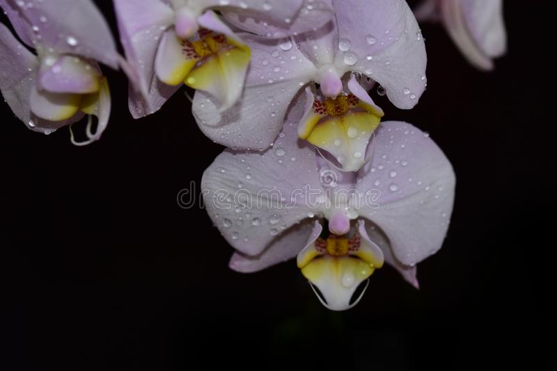 Nice colorful orchid close up in the sunshine stock image