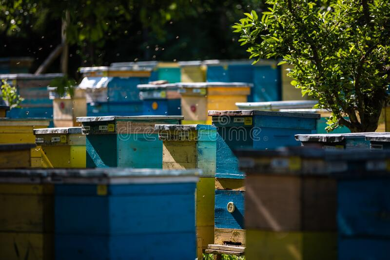 Beehive and bees over honey farm stock image