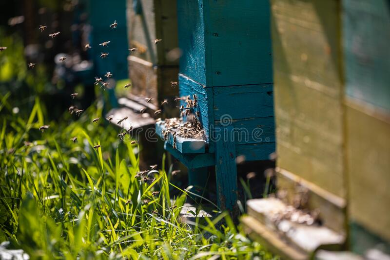 Beehive and bees over honey farm royalty free stock photo