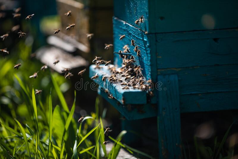 Beehive and bees over honey farm royalty free stock photos