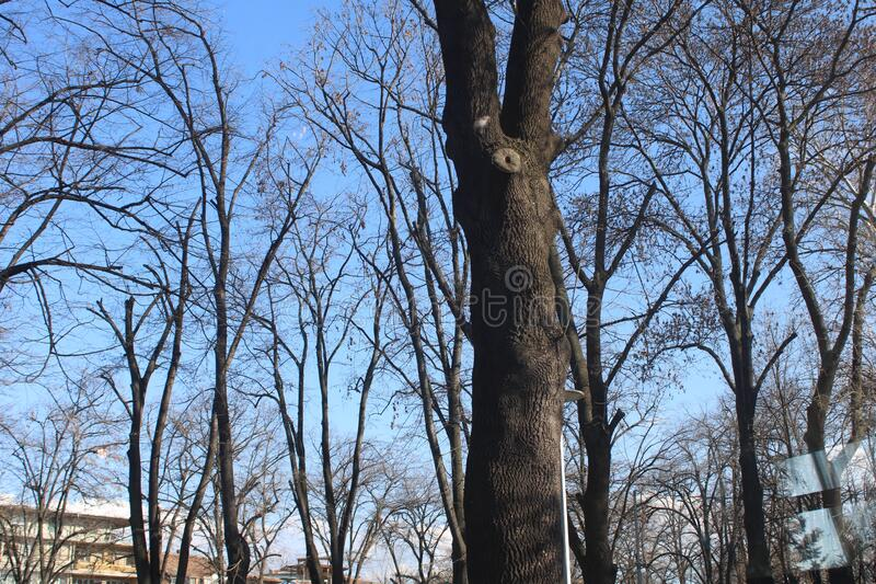 The nice contrast between the dark leavless branches of the winter trees and the blue sky in Vidin, Bulgaria stock photos