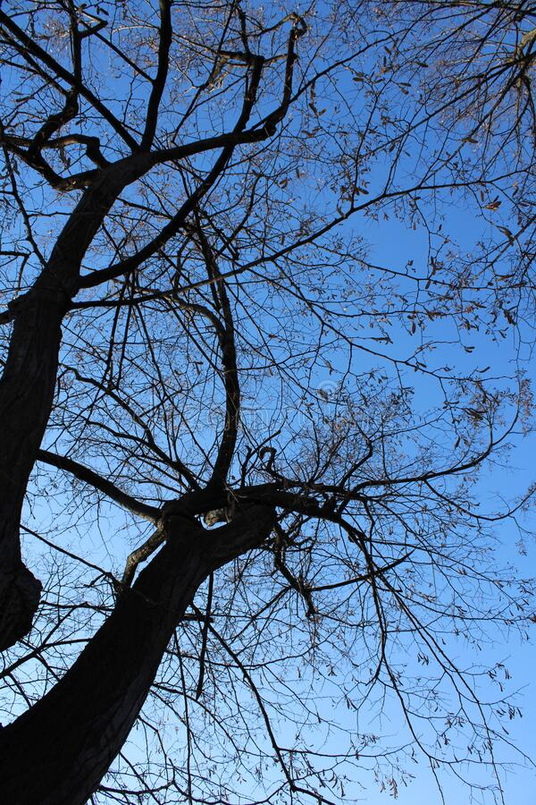 The nice contrast between the dark leavless branches of the winter trees and the blue sky in Vidin, Bulgaria stock photography