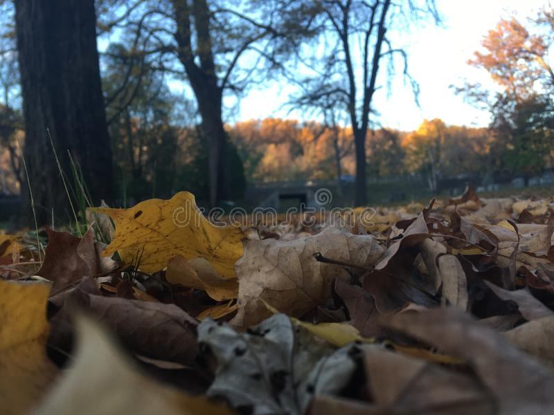 Fall Days; CoolNights, fallen leaves. A nice cool fall night with some fallen leaves royalty free stock photography