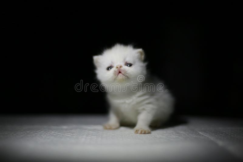 Nice  Cute newborn little cat baby. Usually a month old newborn cat just opened his eyes, very cute,people love the little animal baby cat stock photos