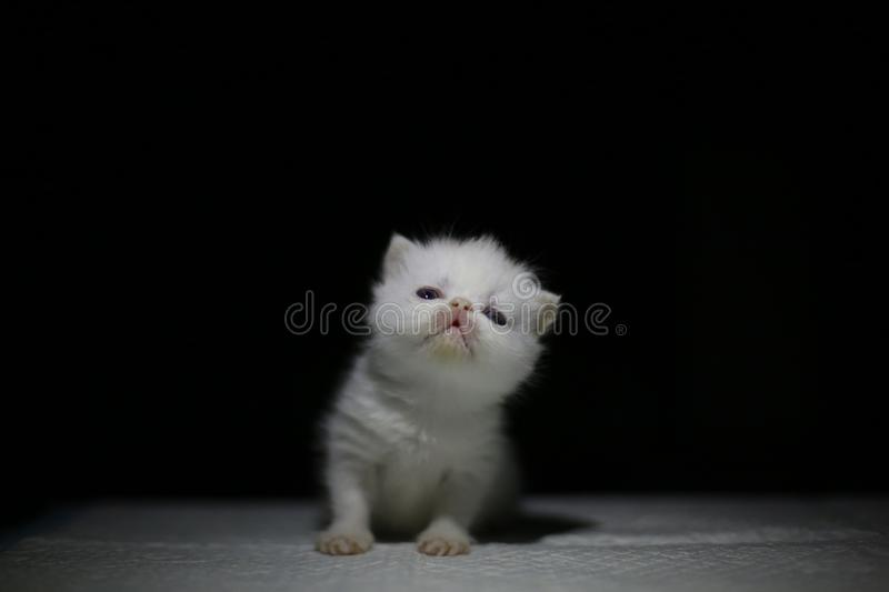 Nice  Cute newborn little cat baby. Usually a month old newborn cat just opened his eyes, very cute,people love the little animal baby cat stock photography