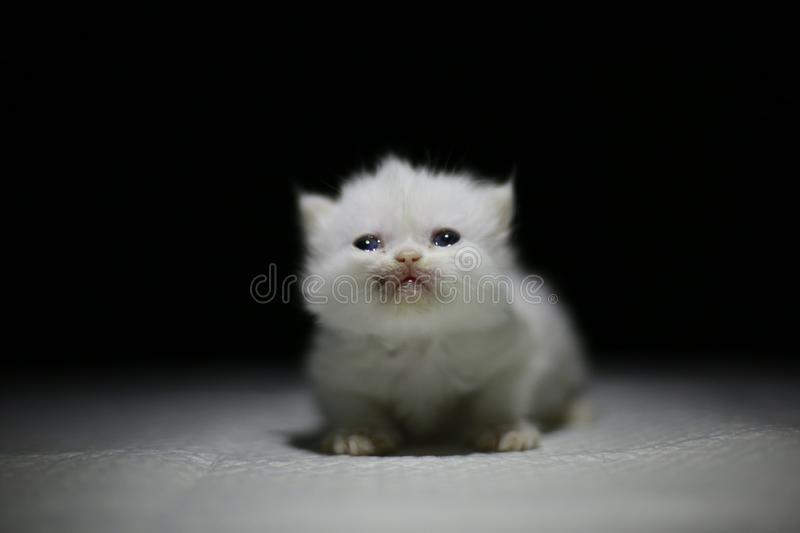 Nice  Cute newborn little cat baby. Usually a month old newborn cat just opened his eyes, very cute,people love the little animal baby cat stock images