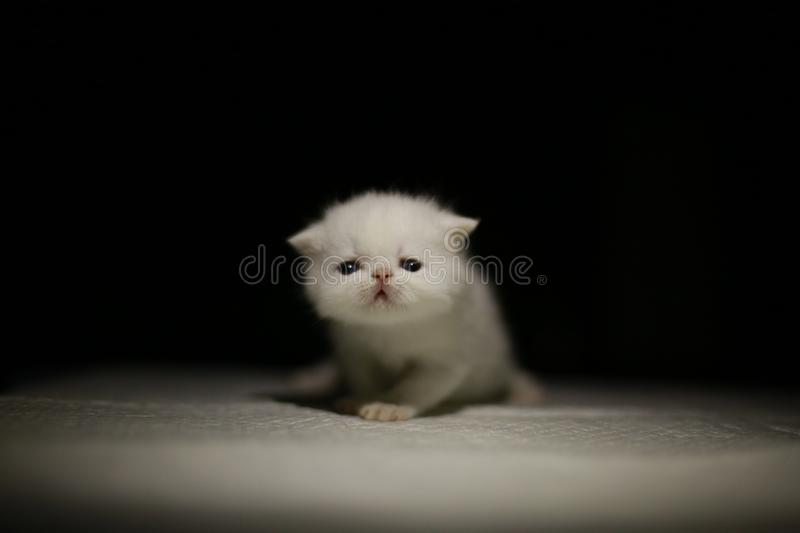 Nice  Cute newborn little cat baby. Usually a month old newborn cat just opened his eyes, very cute,people love the little animal baby cat royalty free stock photo