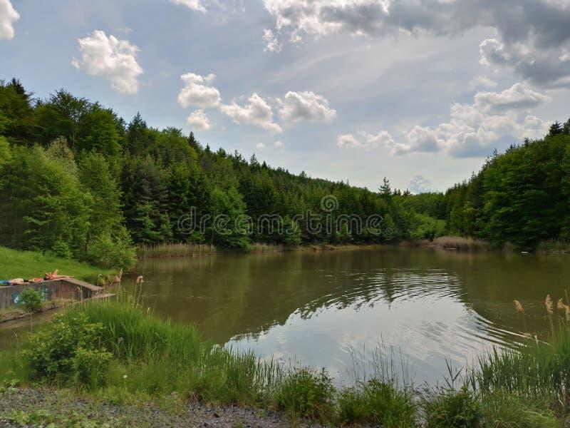 Nice damm som döljas i skogen arkivbilder