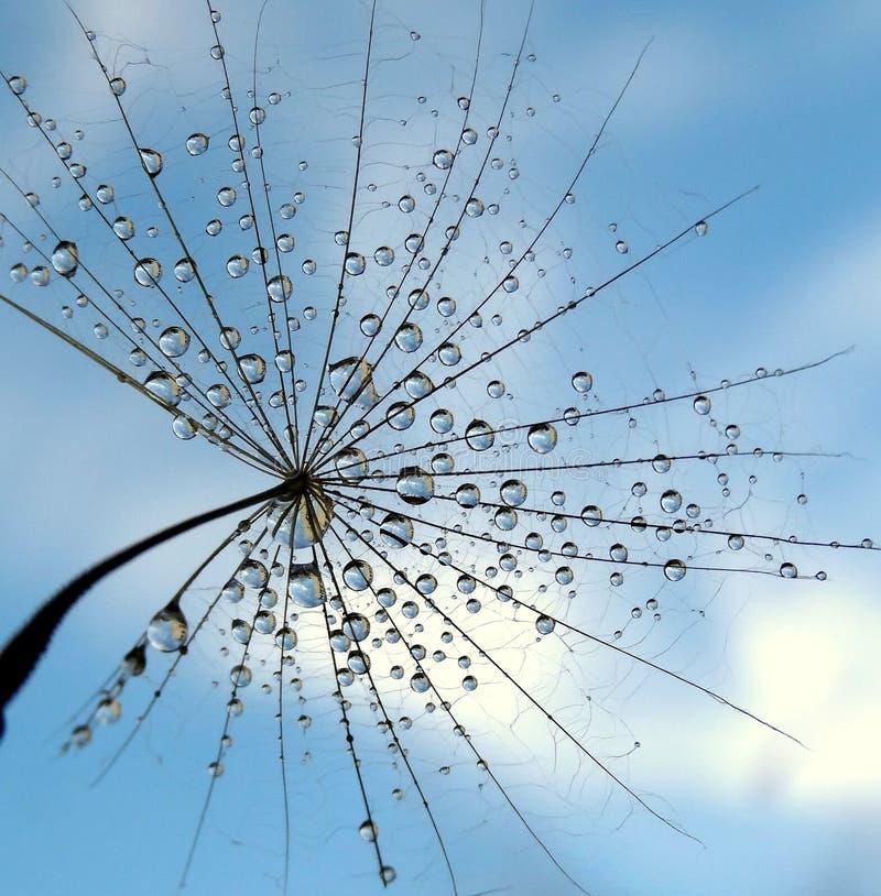 Nice dandelion stock photos