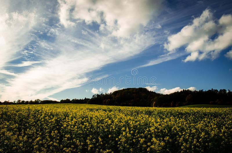 Nice day royalty free stock images