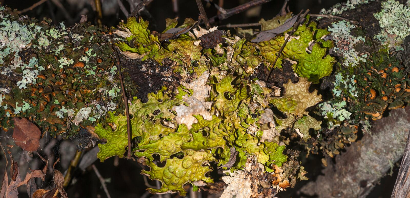 Lichen Microhabitat stock photo