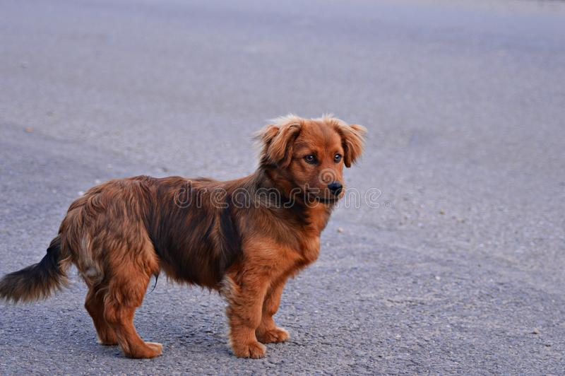 Nice dog. Look what a nice smiling face has this dog, very quite and friendly royalty free stock photo