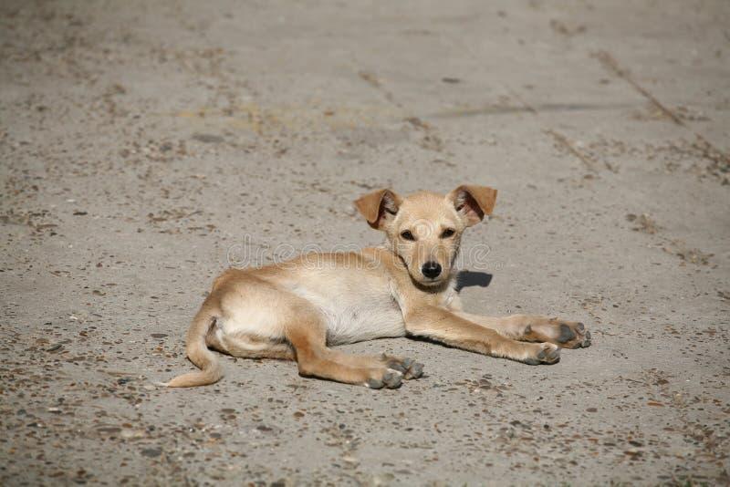 Nice doggy stock photos