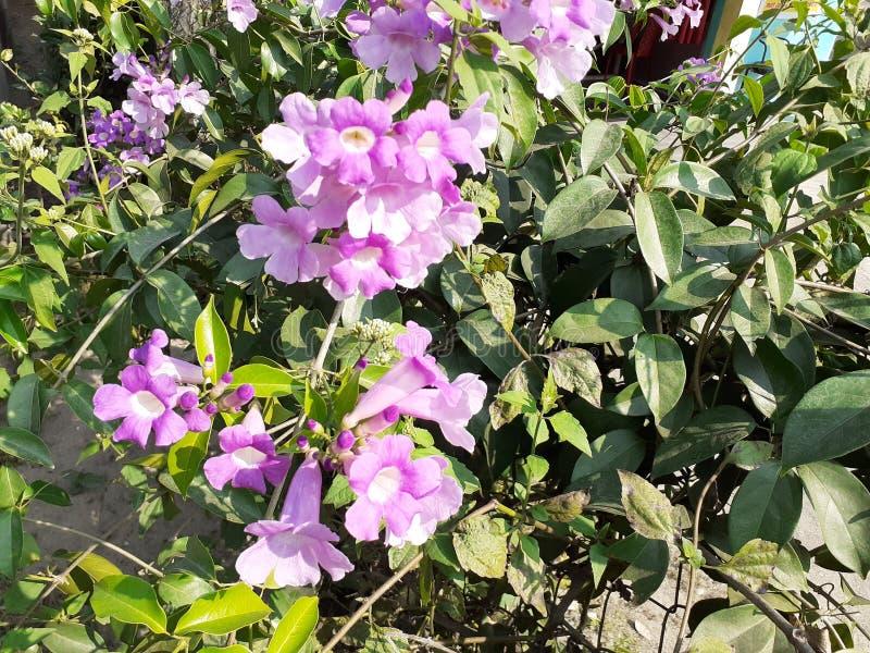 Nice Flower image. royalty free stock photos