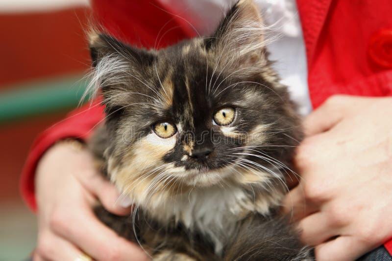 Download Nice fluffy kitten stock photo. Image of gentle, fondling - 5056460