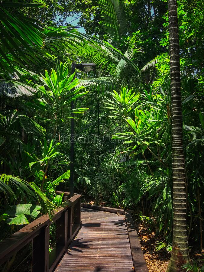 Nice footpath in Australia, Brisbane, South Bank Parkland, Rainforest walk.  royalty free stock images