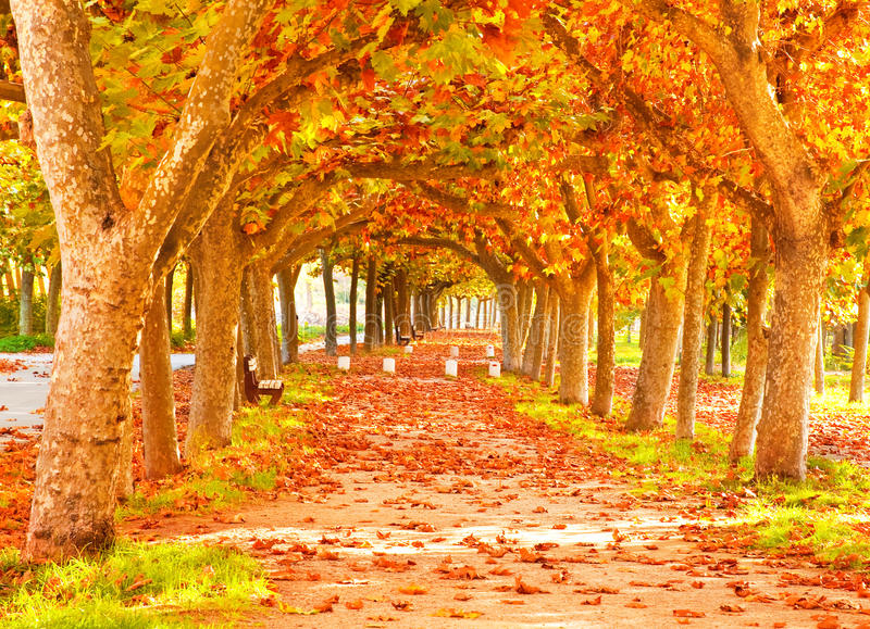 Nice Forest In Autumn Stock Photo. Image Of Fall, Green