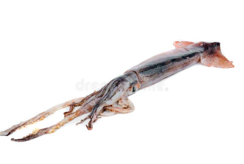 Nice Fresh Squid Stock Image. Image Of Group, Invertebrate