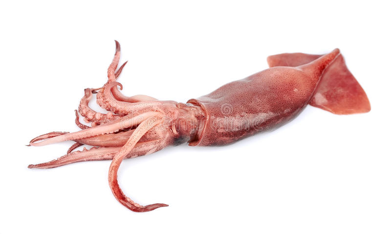 Nice Fresh Squid Stock Photo. Image Of Seafood, Brown
